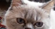 Sen Bir Kedi Olsaydın (5 yaş çocuklarımıza sorduk)