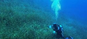 Türkiye'nin Deniz Koruma Alanlarındaki Mavi Karbon Değeri Dikkat Çekiyor