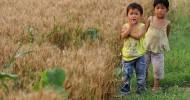 Çin'in Tarım Arazilerinin Yüzde 40'ı Zehirli
