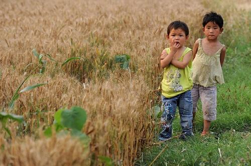 Ağır metaller Çin'deki ekilebilir arazilerin yüzde 40'dan fazlasını kirletmiş durumda; bu da sorunlu gıda anlamına gelmekte. (Fotoğraf: STR/AFP/Getty Images)