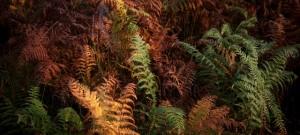 Geveze Bitkiler – Bitkiler Konuşuyor