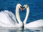 Sevgi Nedir? Bunun En Güzel Cevabı Hayvanlarda