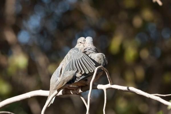 Güvercin (Fotoğraf: yagad)