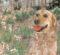 Çinliler Köpek Burcu Hakkında Ne Derler?