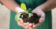 Yaşam İçin Organik Tarım