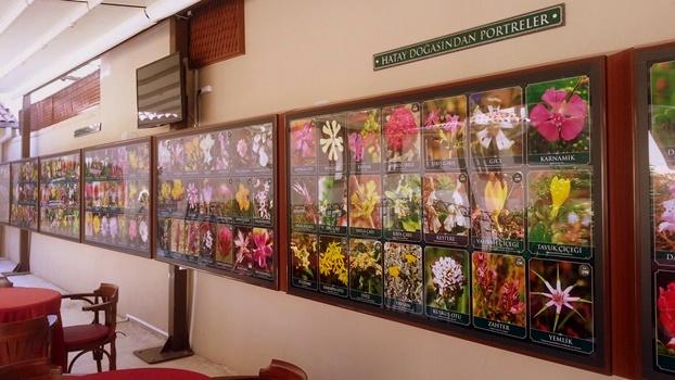 Müzede toplam 280 adet bitki çeşidi bulunuyor. Fotoğraf: Epoch Times Çiğdem Akdeniz