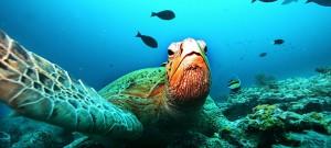 Büyük Set Resifi: Sürmesi Gereken Bir Rüya