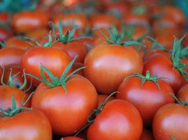 Rusya kapısını 50 bin ton Türk domatesi için açıyor