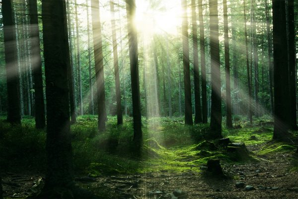 forest-2899654_1280-600×400