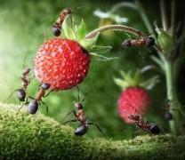 Fotoğrafçının Objektifinden Karıncaların Hayatı