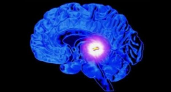 Beynin derinliklerinde gizlenmiş - epifiz bezi gözle benzer bir yapıya sahiptir.
