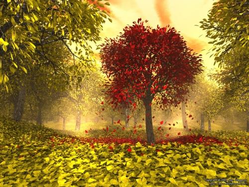 sonbahar-mevsimi-b3876